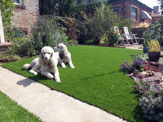 Artificial Grass Photos: Artificial Lawn Sugar City, Colorado Roof Top, Dogs Runs