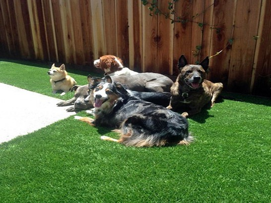 Artificial Grass Photos: Best Artificial Grass Cheraw, Colorado Watch Dogs, Dogs Park