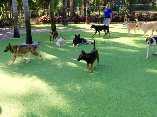 Artificial Grass Photos: Fake Grass Carpet Loma, Colorado Dogs, Dogs Park