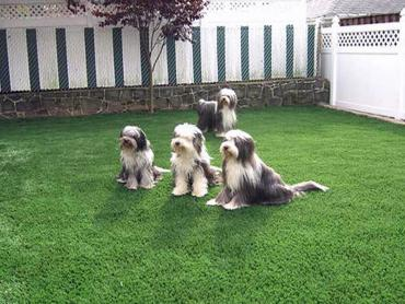 Artificial Grass Photos: Installing Artificial Grass Merino, Colorado Drainage, Beautiful Backyards