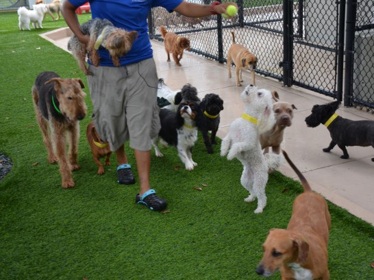 Artificial Grass Photos: Plastic Grass Monte Vista, Colorado Dog Hospital,  Dog Kennels