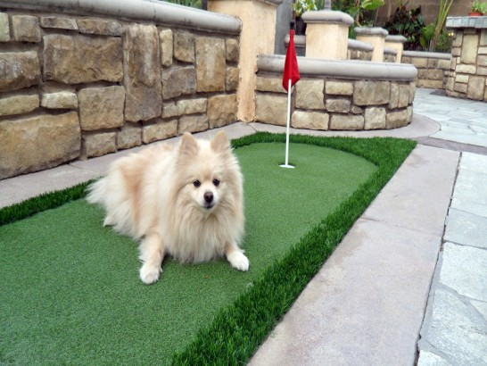 Artificial Grass Photos: Synthetic Turf Yampa, Colorado Office Putting Green, Dogs